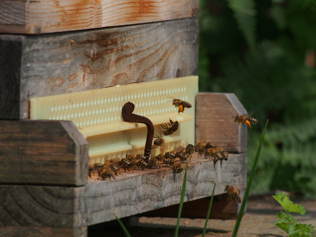Mehrfachnutzung Bienen