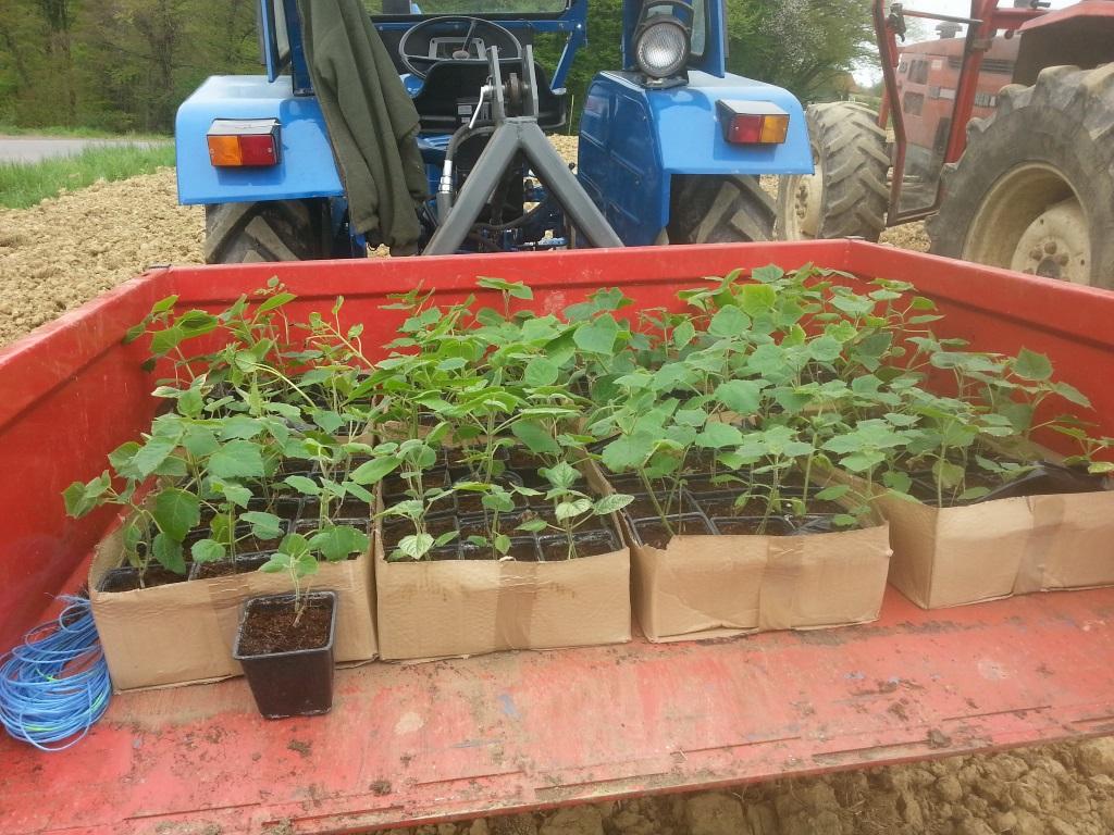 Pflanzen für den Verkauf